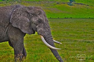 elefantegigantebuonosafaritanzania