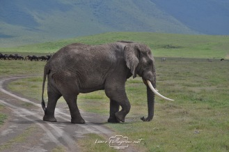 elefantesafaritanzania