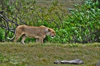 loenessa safari tanzania