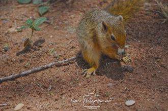 scoiattolosafaritanzania