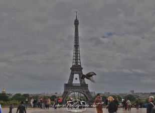 tourEiffel_Paris