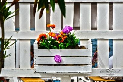 fiori_margheritecolorate_colore