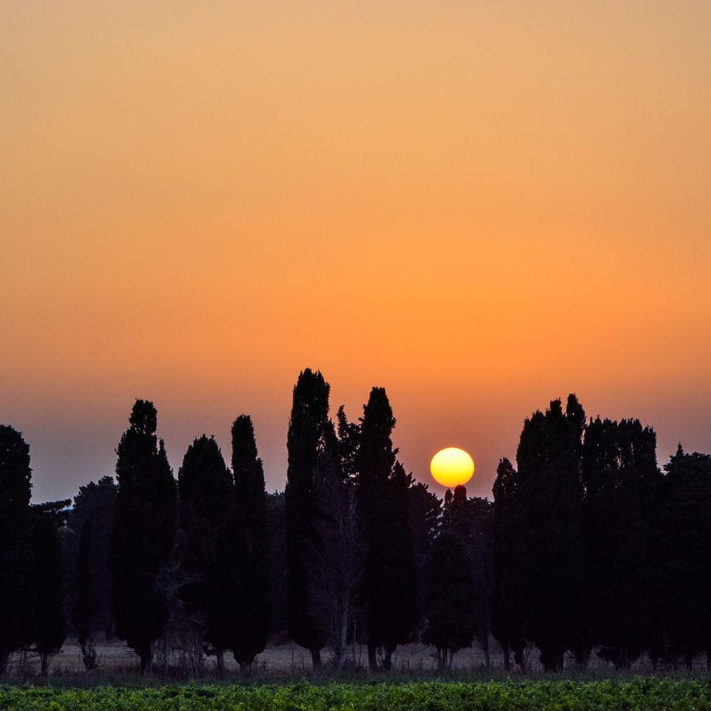 tramontopugliese-min