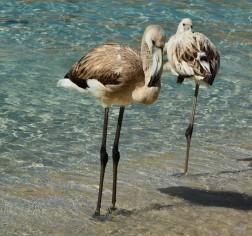 fenicotterispiaggiadeiconigli