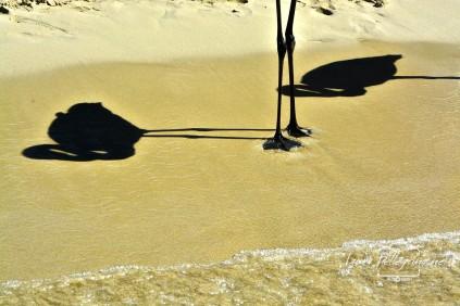 ombre_fenicotteri_spiaggiaconigli_lampedusa