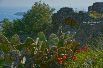 ruderi_isola_cactus_papaveri