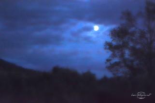 luna_scorcio