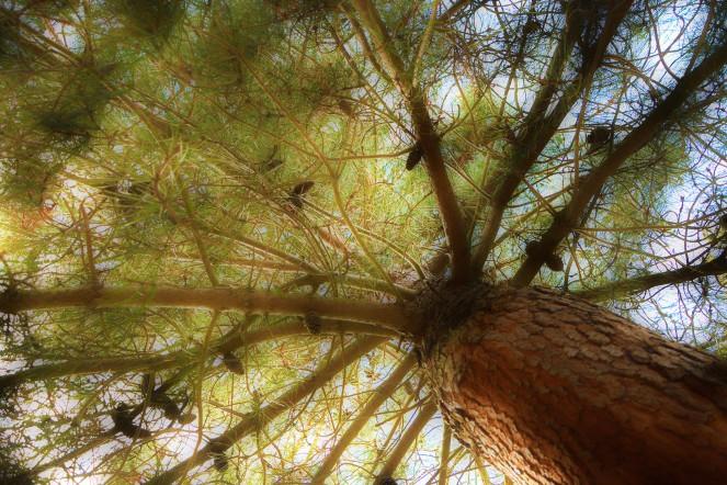 albero_vegetazione