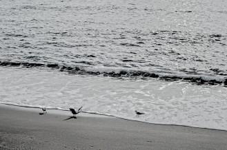 gabbiani_spiaggia_diamante
