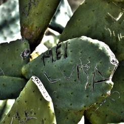 luisa_cactus