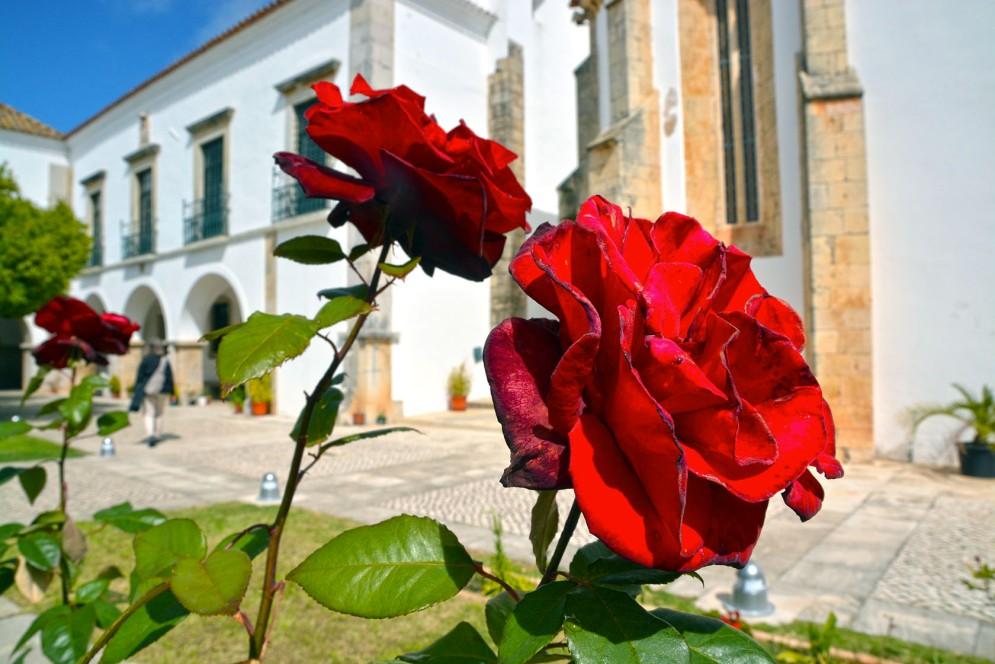 portugal_5413